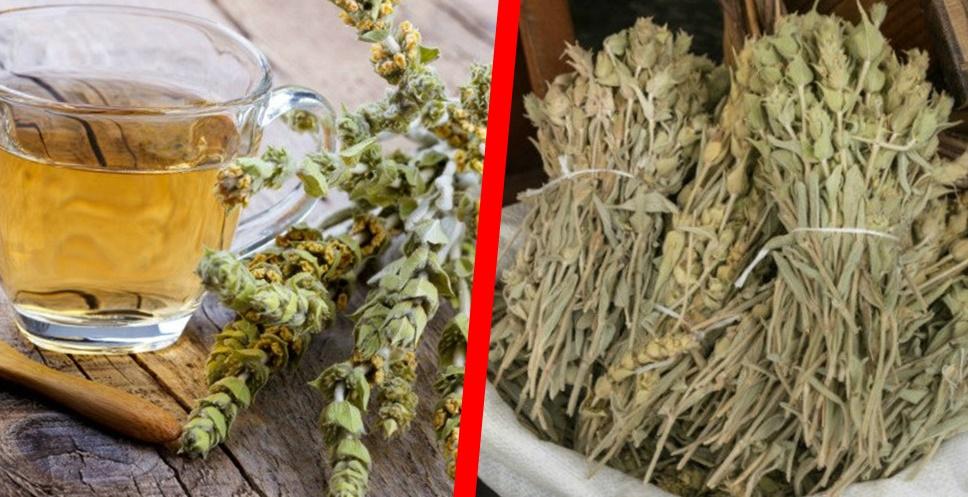 Ada Çayının Sağlığa Faydaları Nelerdir? Ada Çayı Nasıl yapılır?